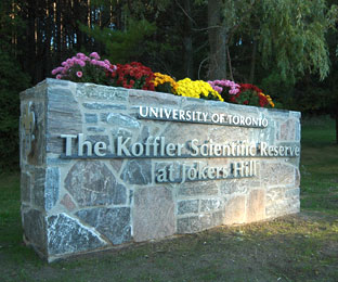 The Koffler Scientific Reserve at Jokers Hill is a nationally recognized site for cutting-edge research, education and public outreach in ecology and biodiversity. Located on the Oak Ridges Moraine, the Reserve's unique diversity of habitats and species offers precious opportunities for some of this country's leading environmental researchers to understand the profound impact of global change and expand our understanding of the natural world. Every year, hundreds of students and postdoctoral fellows come to the Reserve to work with our scientists and gain the hands-on experience with ecological systems that no university campus can offer.